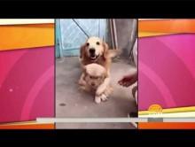 【海外発!Breaking News】産まれたばかりの仔犬を必死で守る過保護なパパ犬<動画あり>