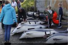 【海外発!Breaking News】海が真っ赤に染まる! フェロー諸島のクジラ追い込み漁(デンマーク)<動画あり>