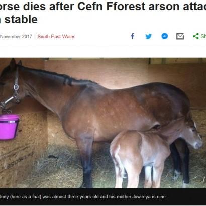 【海外発!Breaking News】優秀な競争馬を育ててきたブリーダーの馬小屋が放火 2歳の子馬が犠牲に(英)