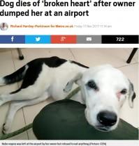 【海外発!Breaking News】空港で捨てられた犬、飼い主を待ち続けるも息絶える(コロンビア)