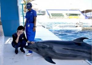 イルカにタッチする体験プログラム