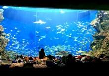 年末年始に水族館で一晩過ごす 鴨川シーワールド「トロピカルアイランド ・ナイトステイ」開催