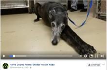 【海外発!Breaking News】飼い主の亡骸に1か月間寄り添い続けた犬(米)