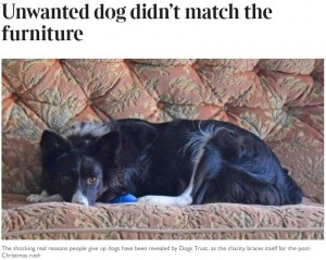 """【海外発!Breaking News】「家具とマッチしないから」 動物慈善団体が明かした""""飼い主が犬を手放す理由""""に愕然(英)"""