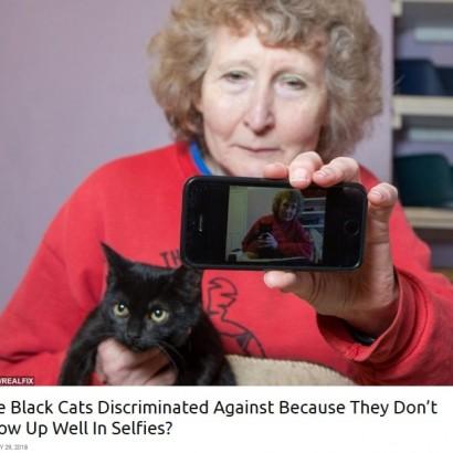【海外発!Breaking News】「自撮りで映えない」 黒猫ばかりが捨てられる理由に保護センターも嘆く(英)
