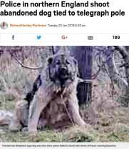 【海外発!Breaking News】捨てられた犬の飼い主を探すも見つからず 警察官が射殺(英)