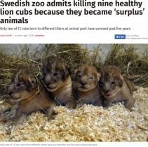 【海外発!Breaking News】5年間で健康な子ライオン9頭を安楽死 スウェーデンの動物園の対応に物議