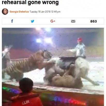 【海外発!Breaking News】サーカスのリハーサル中に大乱闘 トラ、ライオンが馬を急襲(中国)