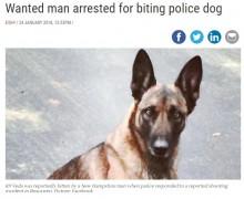 【海外発!Breaking News】発砲事件の容疑者、警察犬に噛みついて逮捕に抵抗(米)