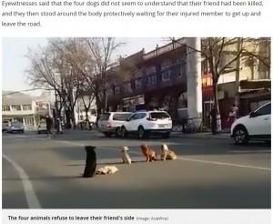 【海外発!Breaking News】路上で轢かれた犬のそばを離れようとしない4頭に心打たれる(中国)<動画あり>