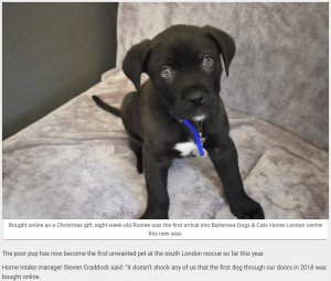 【海外発!Breaking News】クリスマスギフトだった仔犬、飼い主に捨てられ施設に(英)