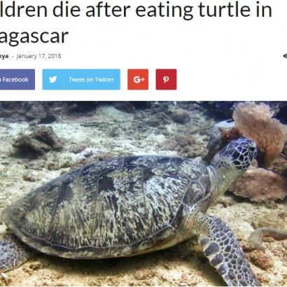 【海外発!Breaking News】ウミガメで食中毒、子供8人が犠牲に 母乳飲んで死亡した新生児も(マダガスカル)