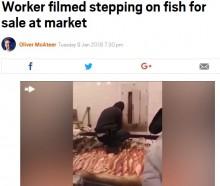 【海外発!Breaking News】売り物の魚を踏んで歩く男 NYチャイナタウンの鮮魚店ショーケースで