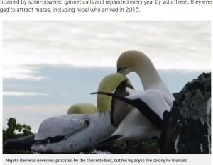 【海外発!Breaking News】カツオドリの雄、模型の雌に恋して長年片思いのままこの世を去る(ニュージーランド)<動画あり>