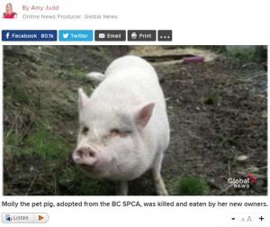 【海外発!Breaking News】動物保護施設からペットとして迎えた豚を殺し食べた飼い主(カナダ)
