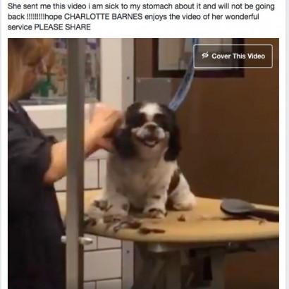 【海外発!Breaking News】ペットショップにいた乱暴なトリマー、動画を撮られクビに(米)