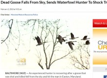 【海外発!Breaking News】落ちてきた雁が頭を直撃 ハンターが救急搬送(米)