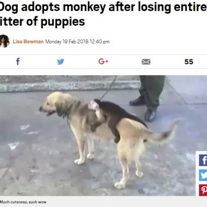 【海外発!Breaking News】母親がいない子ザル、我が子を亡くした母犬の背中にしがみつく(コロンビア)<動画あり>