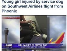 【海外発!Breaking News】セラピーアニマルの機内持ち込みで事故 犬が少女に噛みつく(米)