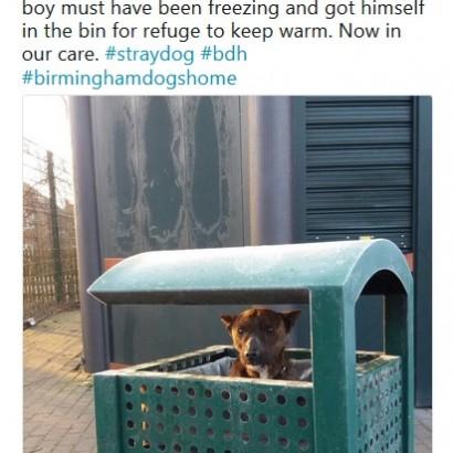 【海外発!Breaking News】寒空の公園のゴミ箱で震えた犬が見つかる(英)