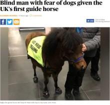 """【海外発!Breaking News】英国初、犬恐怖症で視覚障がいの男性のために""""盲導馬""""が導入"""