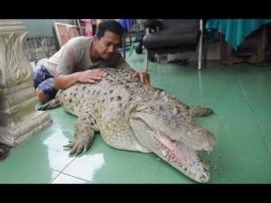 【海外発!Breaking News】ワニを飼って20年になるインドネシアの一家 体重200kgに成長も「家族の一員」<動画あり>