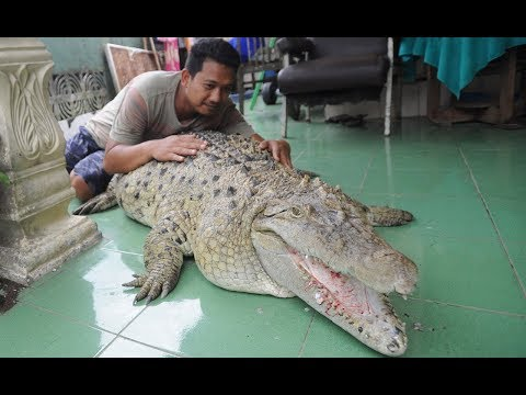 ワニをペットとして飼うインドネシアの家族(画像は『Barcroft Animals 2018年2月1日公開YouTube「Our Family Pet Is A Six Foot Croc | BEAST BUDDIES」』のサムネイル)