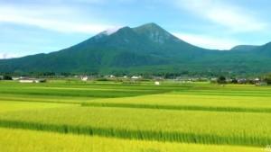 日本トップクラスの日照量を誇る宮崎