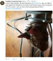 【海外発!Breaking News】好奇心からシンクをのぞいた子ネコ 生ゴミ粉砕機にスッポリはまる(米)