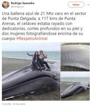 【海外発!Breaking News】死んだクジラに「愛してるよ」の落書き Vサインで写真撮影も(チリ)