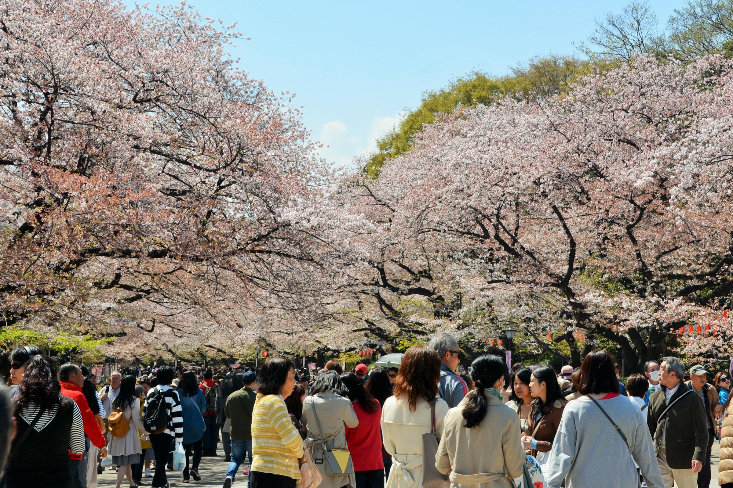 花見客で賑わう上野公園