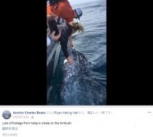 【海外発!Breaking News】ホエールウォッチングで寄ってきたクジラに…違法行為のツアー客に罰金刑か(米)<動画あり>
