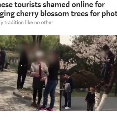 【海外発!Breaking News】桜の木に登り「花吹雪写真」を撮る 大ヒンシュクを買う花見客たち(中国)