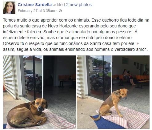 病院の外で4か月も飼い主を待つ犬(画像は『Cristine Sardella 2018年2月27日付Facebook「Temos muito o que aprender com os animais.」』のスクリーンショット)