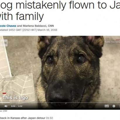 【海外発!Breaking News】日本行きの便に誤って乗せられた犬、無事アメリカに帰国 飼い主「ユナイテッド航空は二度と利用しない」