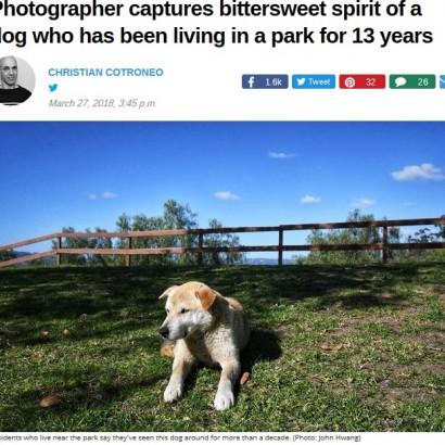 【海外発!Breaking News】公園に住んで13年 自由気ままに生きる犬(米)