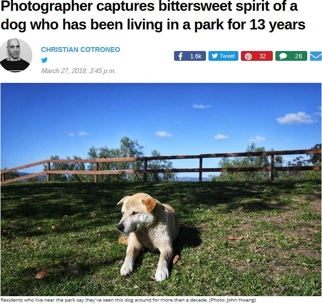 公園に住み続ける犬、その理由を誰も知らず(画像は『Mother Nature Network 2018年3月27日付「Photographer captures bittersweet spirit of a dog who has been living in a park for 13 years」(Photo: John Hwang)』のスクリーンショット)