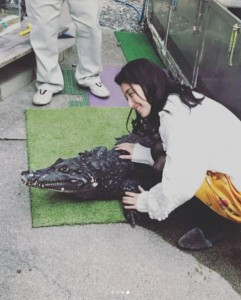 「ワニちゃん」を撫でる橋本マナミ(画像は『橋本マナミ 2018年3月13日付Instagram「本物です。こたつに入っててかわいい」』のスクリーンショット)