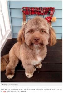 見れば見るほど人間の顔に見えるヨーギー(画像は『Mirror 2018年3月14日付「Dog with human face is causing havoc – and people are comparing him to celebs」(Image: Caters News Agency)』のスクリーンショット)
