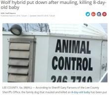 【海外発!Breaking News】なぜペットに危険な狼犬を…生後8日の赤ちゃんが噛み殺される(米)