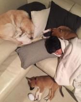 """【エンタがビタミン♪】滝川クリステル""""3.11""""で保護されたワンちゃんと寝る姿 「当たり前の毎日に感謝です」"""