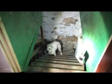 【海外発!Breaking News】「いつからそこに?」中古住宅を買った男性、地下室に繋がれた犬を発見(米)<動画あり>