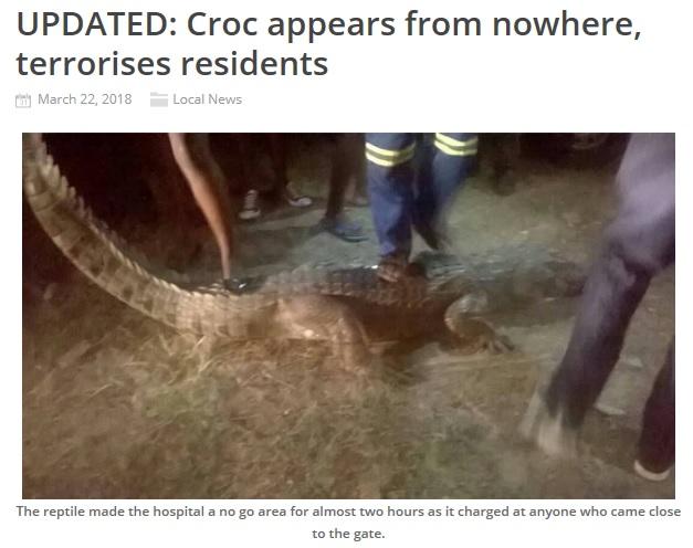 ワニが病院玄関に居座り、中に入れない事態に(画像は『The Chronicle 2018年3月22日付「UPDATED: Croc appears from nowhere, terrorises residents」』のスクリーンショット)