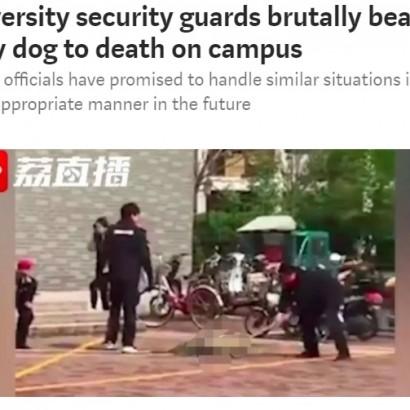 【海外発!Breaking News】大学構内で子犬を産んだ野良犬を荒々しく撲殺 学生ら「なんとむごいことを」(中国)