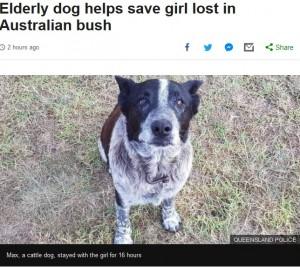 【海外発!Breaking News】17歳老犬お手柄! 森の中で迷子になった3歳女児を守り一晩過ごす(豪)