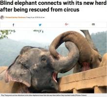 【海外発!Breaking News】働かされ続けた全盲のゾウ、救出され聖地で仲間と触れ合う(タイ)<動画あり>