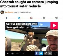 【海外発!Breaking News】サファリ旅行客、冷や汗! 車窓からチーターが侵入(タンザニア)<動画あり>