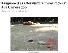 【海外発!Breaking News】「起きろ!」寝ていたカンガルー、見学者の投石により死亡 中国の動物園で