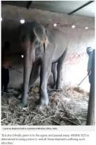【海外発!Breaking News】母親と引き離され密猟者に連れ去られた子ゾウ、虐待と飢えの生涯を閉じる(印)