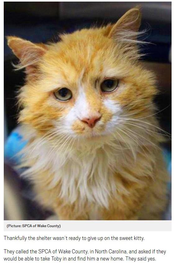 飼い主の家まで戻った猫、安楽死を求められ施設に救われる(画像は『Metro 2018年4月20日付「Toby the cat walks 12 miles to return to the family who abandoned him」(Picture: SPCA of Wake County)』のスクリーンショット)